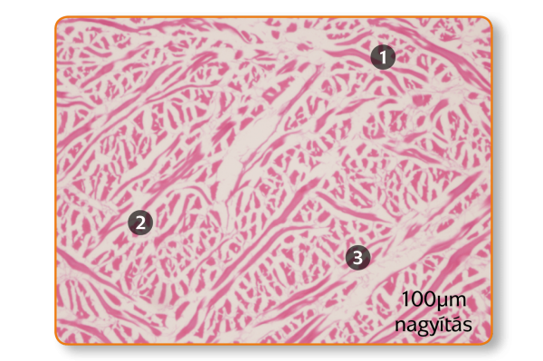 histology-mucoderm